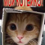 Мой КОТЕЙКО - как Ваш кот поможет получить 1000 рублей!
