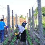 Монастырь Нилова Пустынь ищет юношей и девушек для сельхозработ