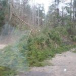 Житель Селижаровского района нашел в лесу коноплю